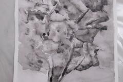 Cours de dessin - Encre de chine - L'arbre - 2015 - 2016 - 32