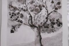 Cours de dessin - Encre de chine - L'arbre - 2015 - 2016 - 33