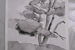 Cours de dessin - Encre de chine - L'arbre - 2015 - 2016 - 34