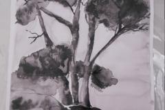 Cours de dessin - Encre de chine - L'arbre - 2015 - 2016 - 35