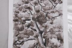 Cours de dessin - Encre de chine - L'arbre - 2015 - 2016 - 38
