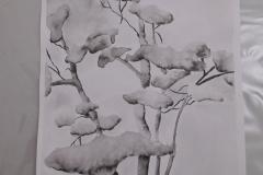 Cours de dessin - Encre de chine - L'arbre - 2015 - 2016 - 39