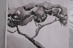 Cours de dessin - Encre de chine - L'arbre - 2015 - 2016 - 40